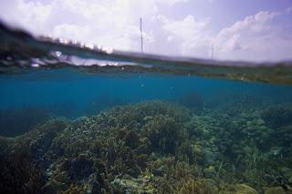 Imagen del fondo de coral en San Blas