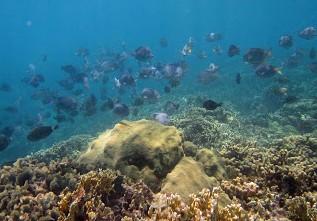 Imagen de un banco de peces en San Blas