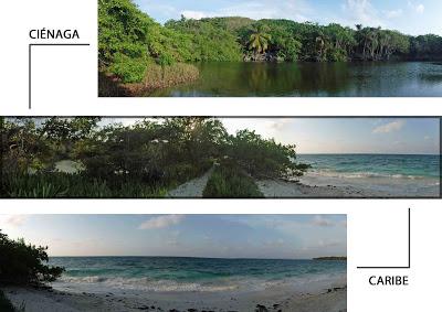 Panorámica que muestra a un lado ciénaga rodeada de piedras volcánicas y a menos de 5 metros el mar Caribe.