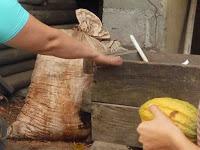 Foto del cacao en una bolsa mientras fermenta