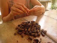 Foto Pelando los granos de chocolate